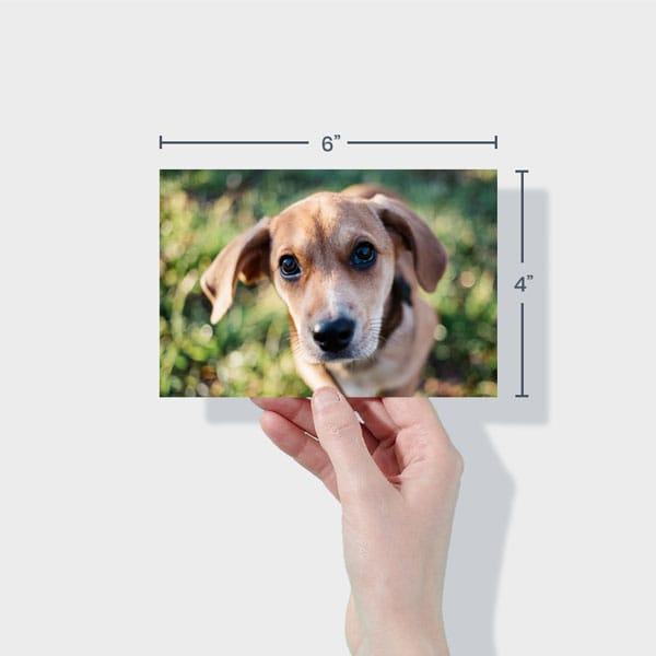 Print 6x4 Dog Photos Online