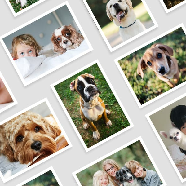 Dog Photo Printing Online