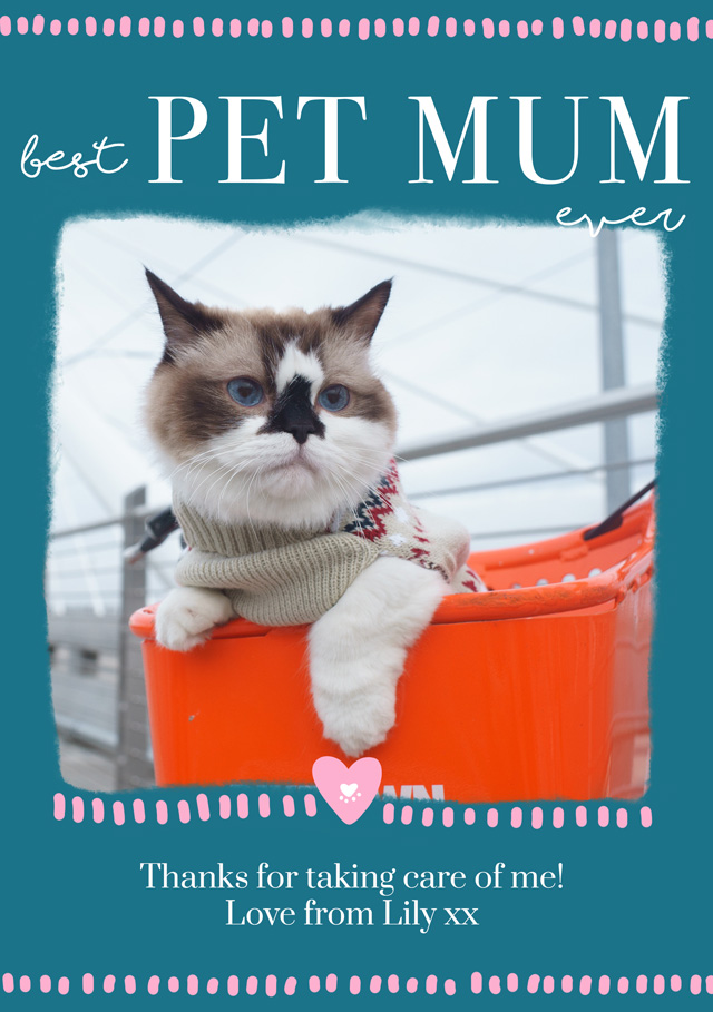 Create a Real Photo Photo Mother's Day Card Best Pet Mum Card