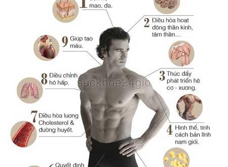 testosterone có tác dụng gì
