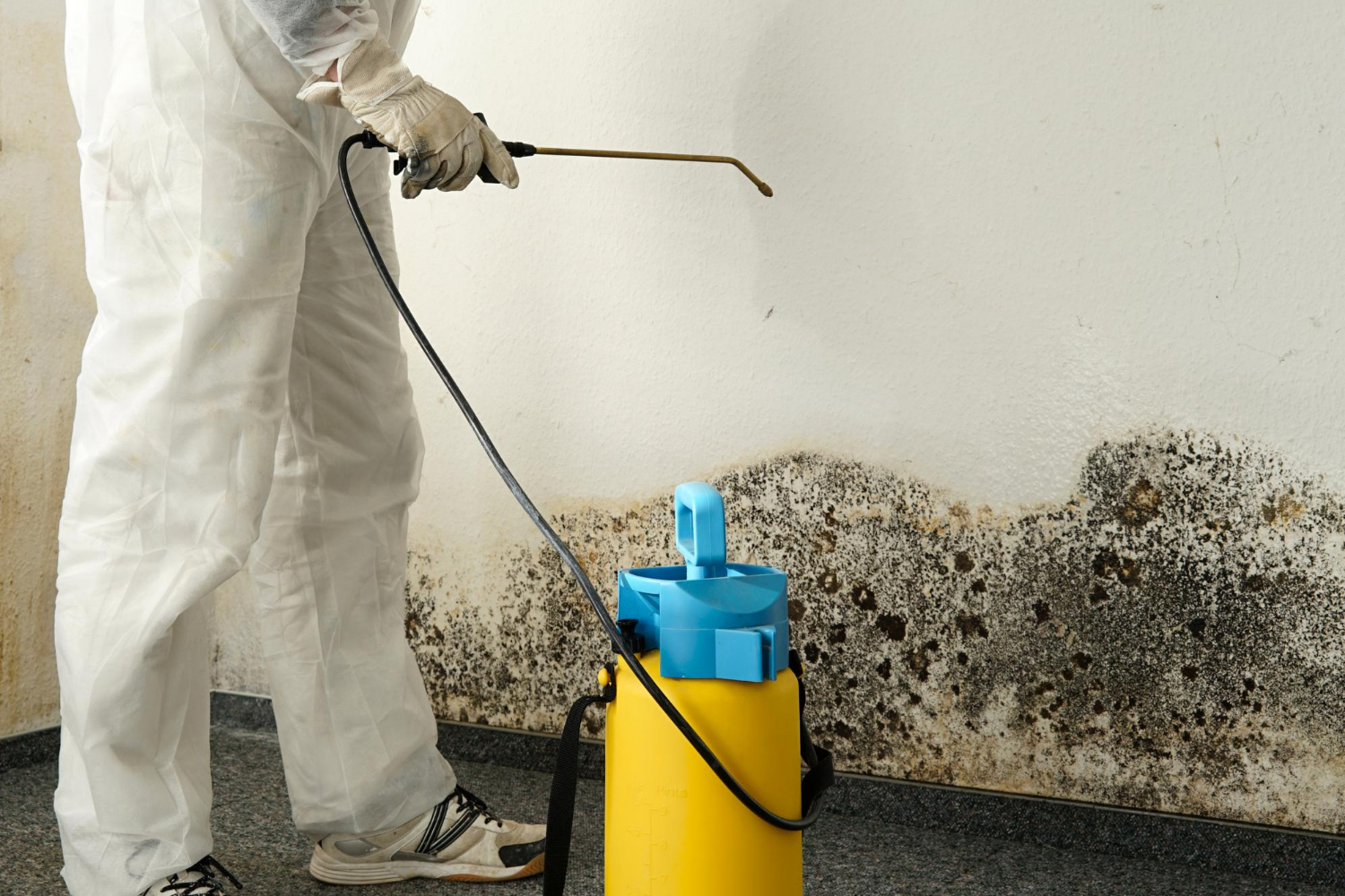 plover mold remediation