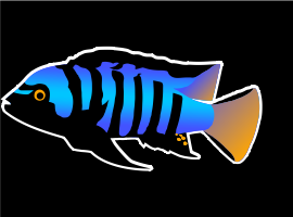 Lake Malawi African Cichlids For Sale