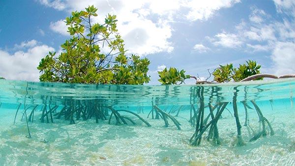 Hutan Mangrove dan Hari Lahan Basah Internasional