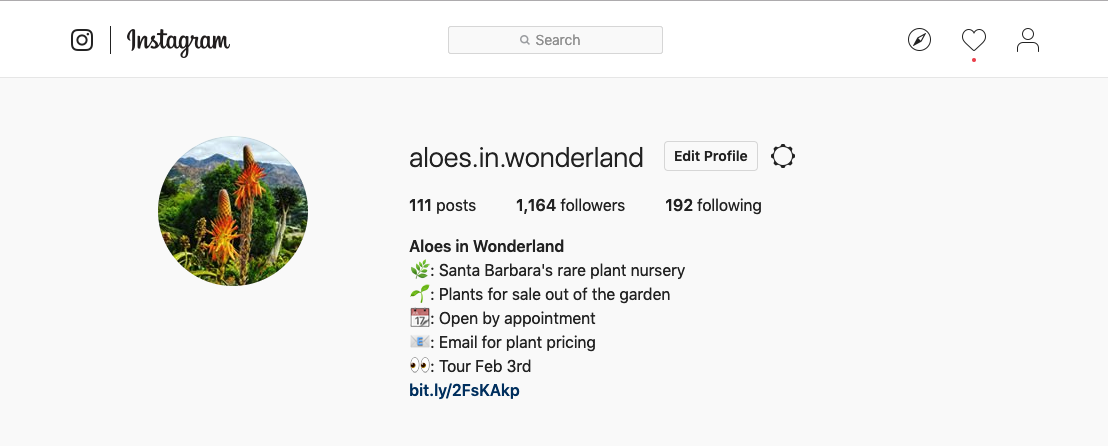 Aloes in Wonderland on Instagram by Al B. Goldin
