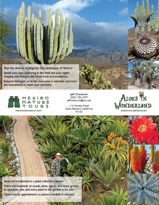 Aloes in Wonderland Print Advertising by Al B. Goldin