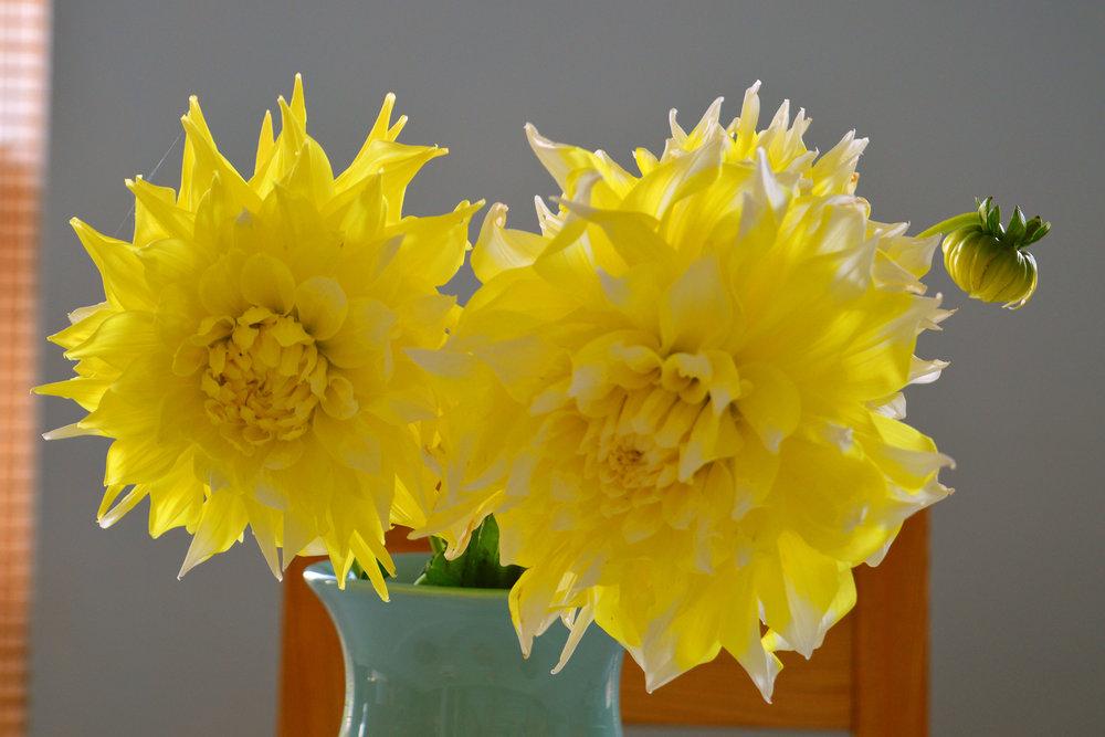 discover-deal-deal-market-flowers-4.jpg