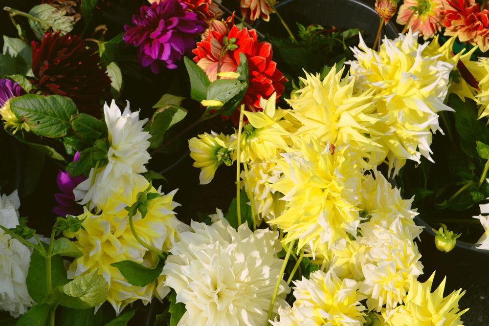 discover-deal-deal-market-flowers-3.jpg