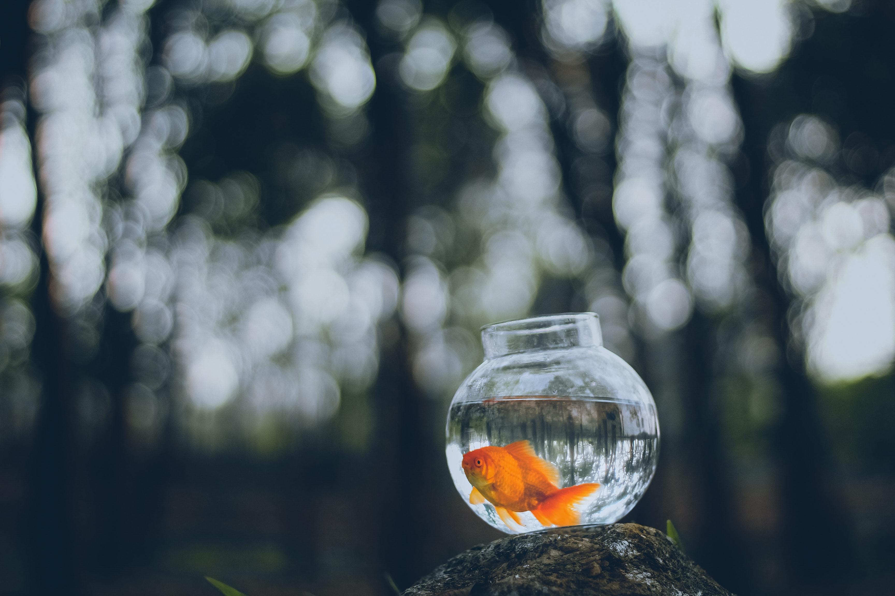 brand building goldfish example