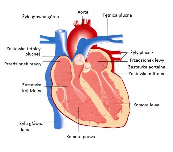 zawał serca, MedtTech Polska