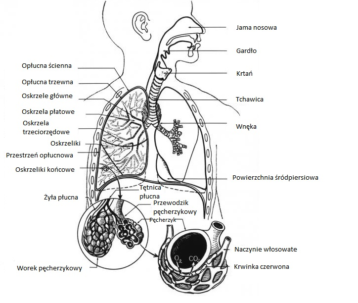 astma_LTO_MedTech Polska