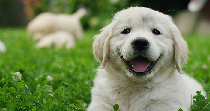 What Is The Value For Duty On Rescue Puppies | A Customs Valuation Case Study
