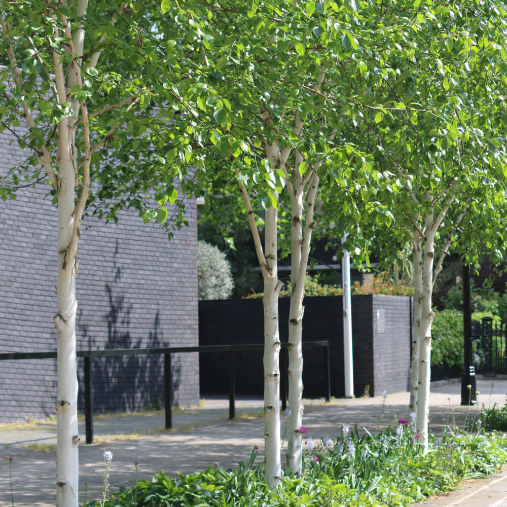 London Core Review - Royal College Of Physicians - Medicinal Garden Gallery - Picture 2