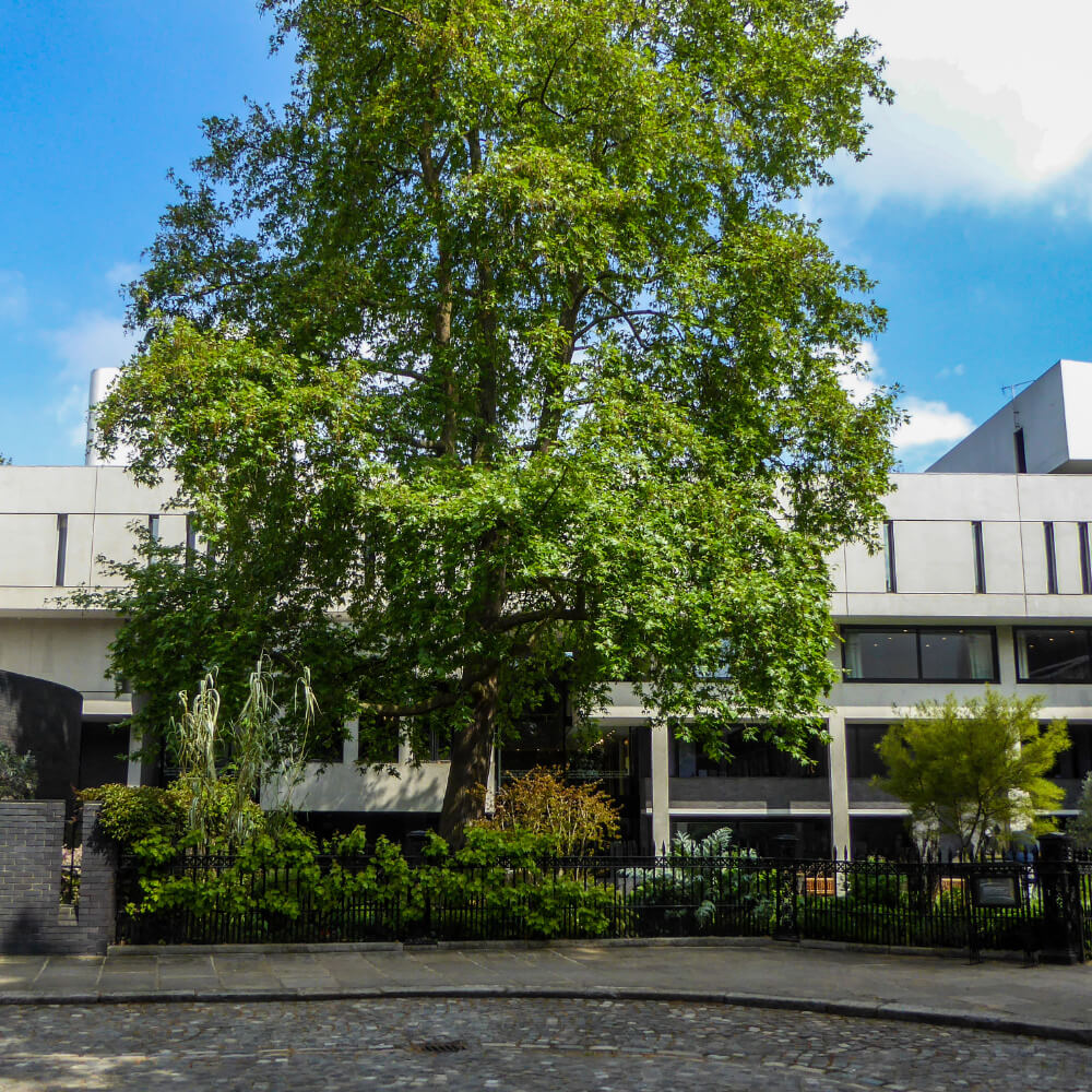 London Core Review - Royal College Of Physicians - Medicinal Garden Gallery - Picture 18