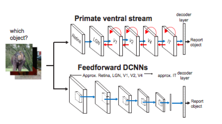Dicarlo image showing how ventral stream in contrast to feedforward deep CNNs, uses recurrent feedback to enhance processing
