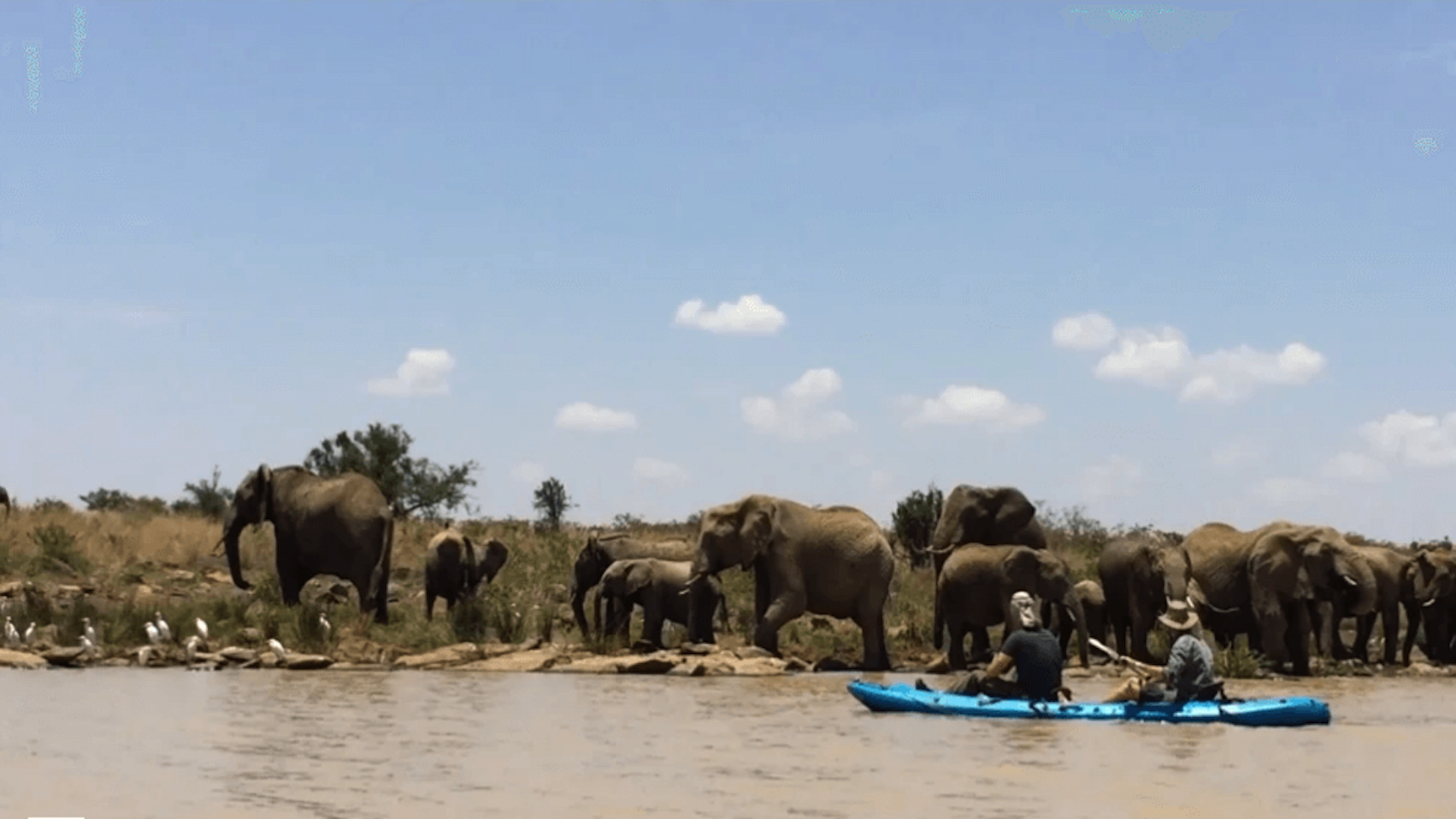 kayaking with Elephants