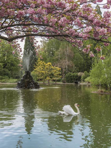 le lac du jardin Henri Vinay