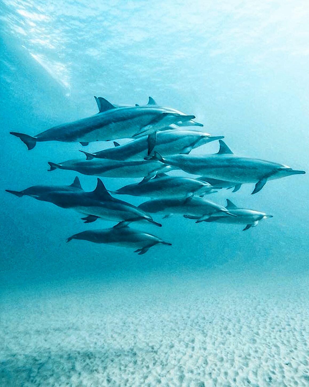 dauphins2