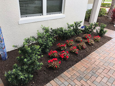 weedless flower bed