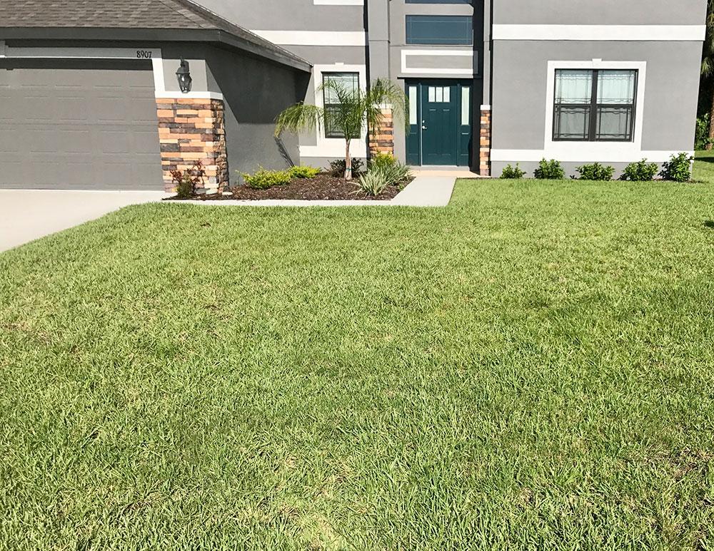 Front lawn maintenance