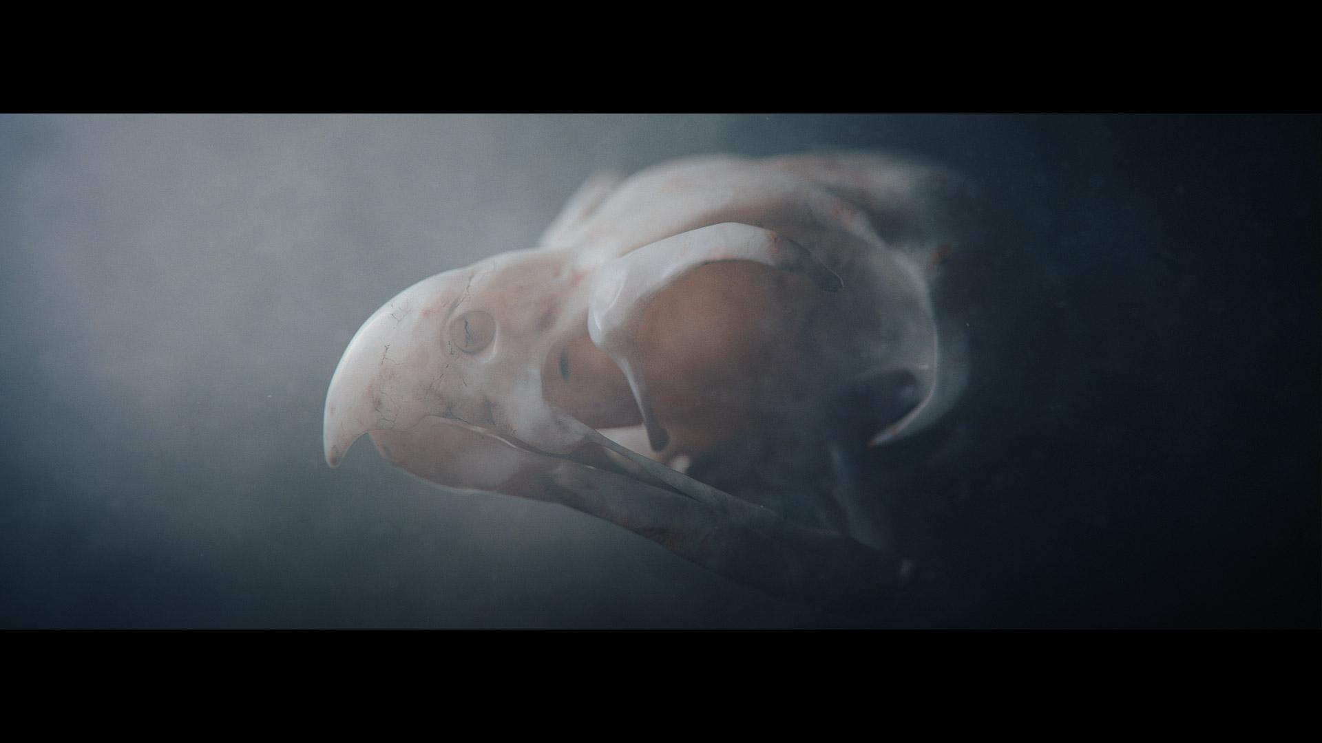CGI bird skull of Sagittarius Serpentarius with bone labels