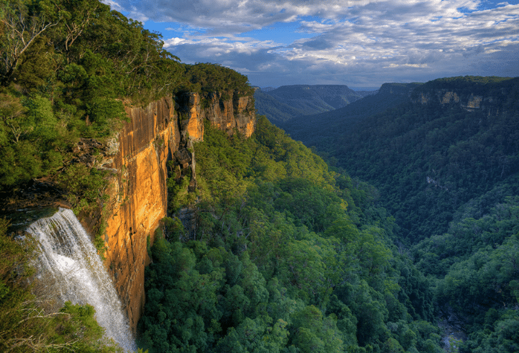 Fitzroy Falls Trails Running Southern Highlands RunHunters
