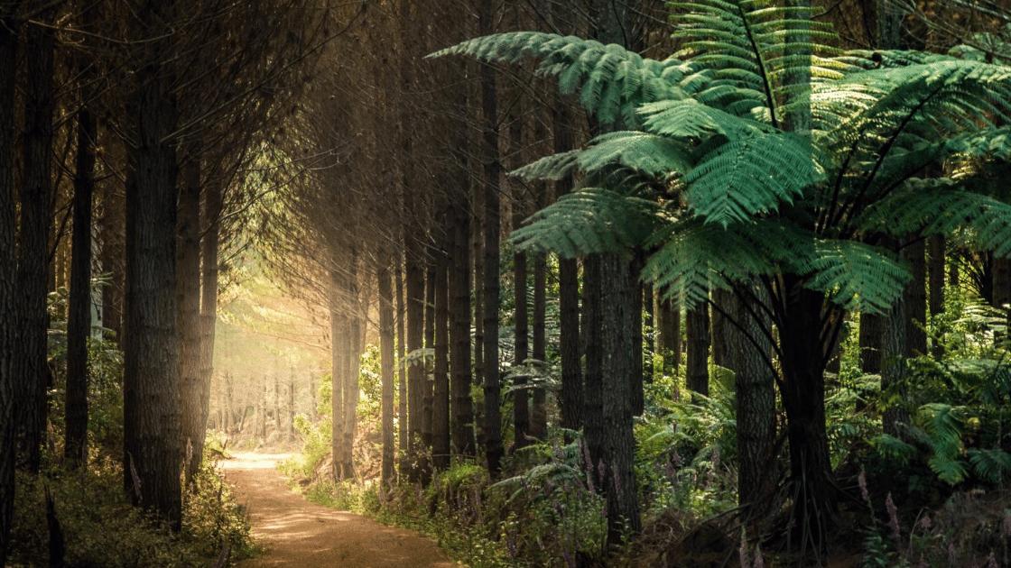 New Zealand Trails on RunHunters