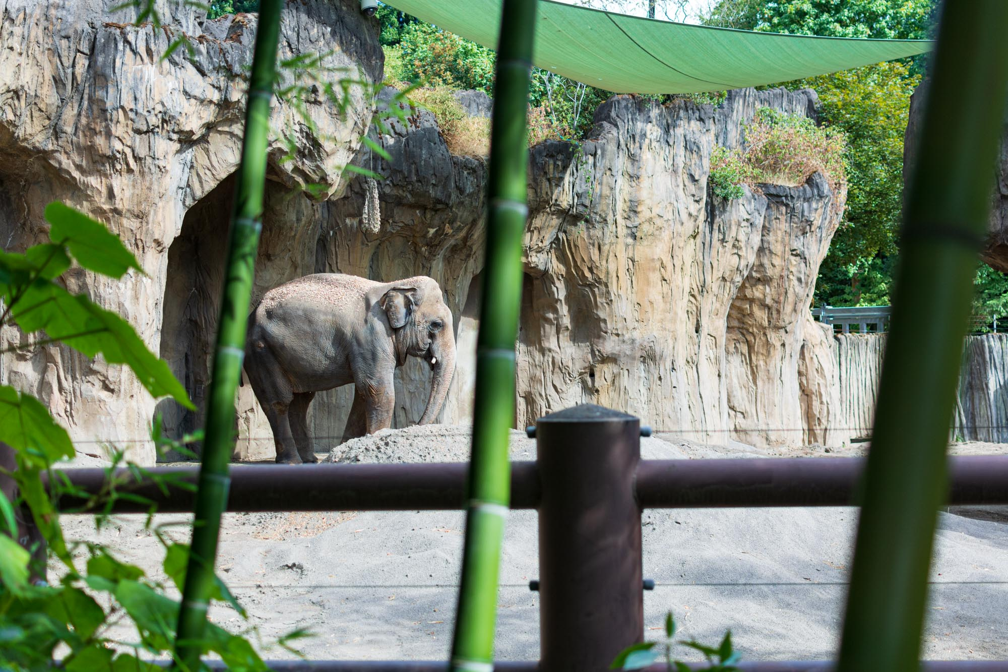 an elephant at the zoo