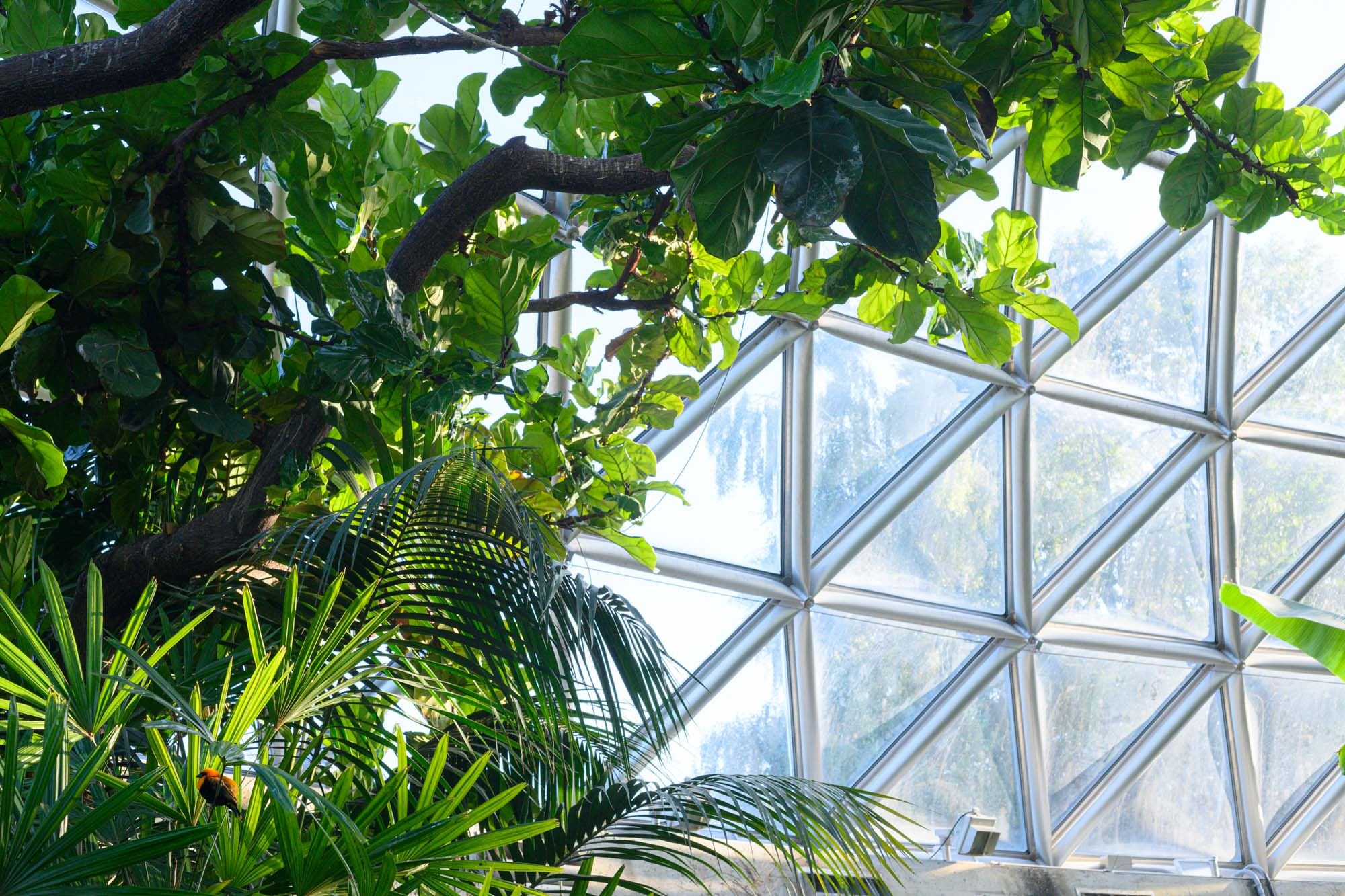 foliage and tropical birds at a conservatory in Vancouver, BC