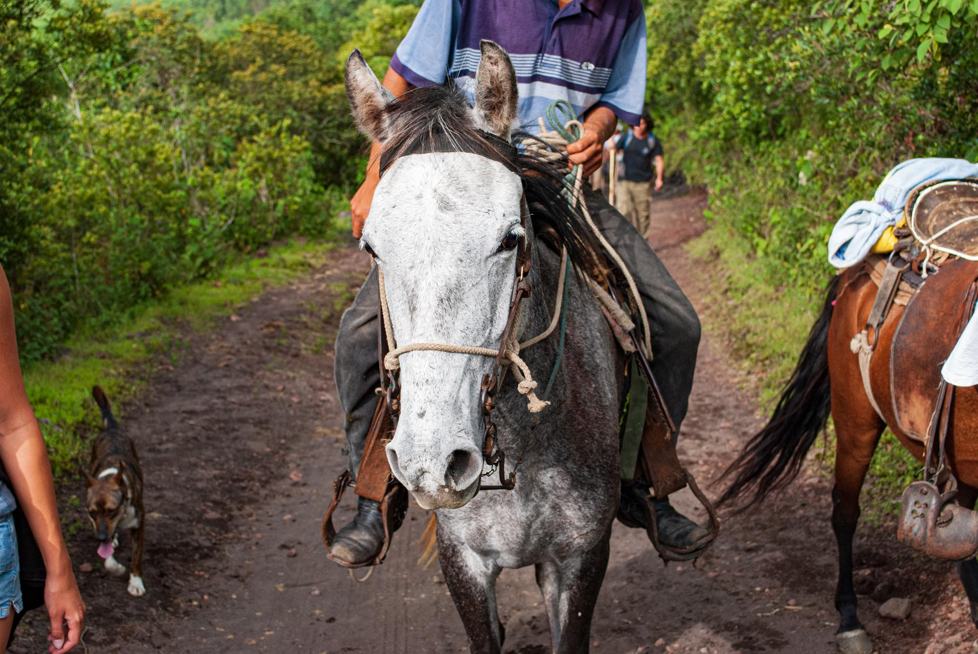 a horse's face as it trots up the side of a volcano in Guatemala