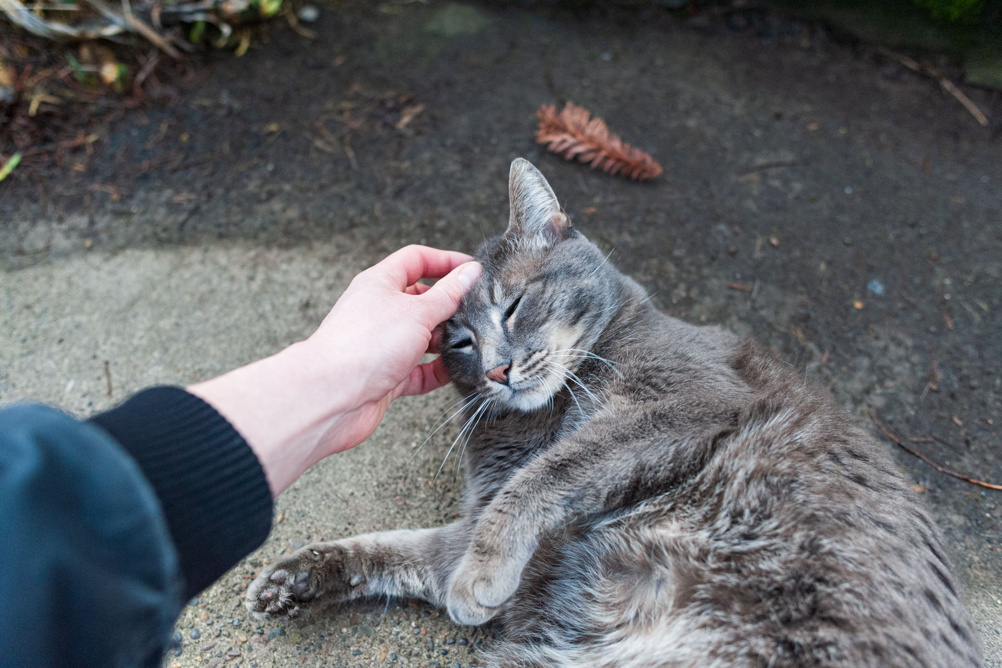 the artist stops to pet a grey cat