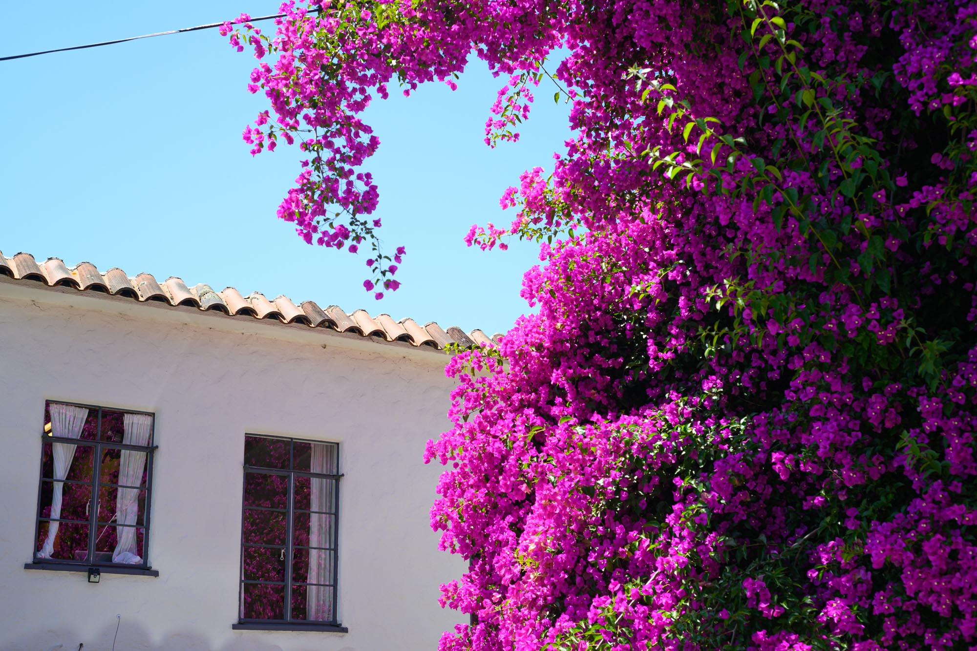 the open window of a house in California looks out on a tree full of bright purple flowers
