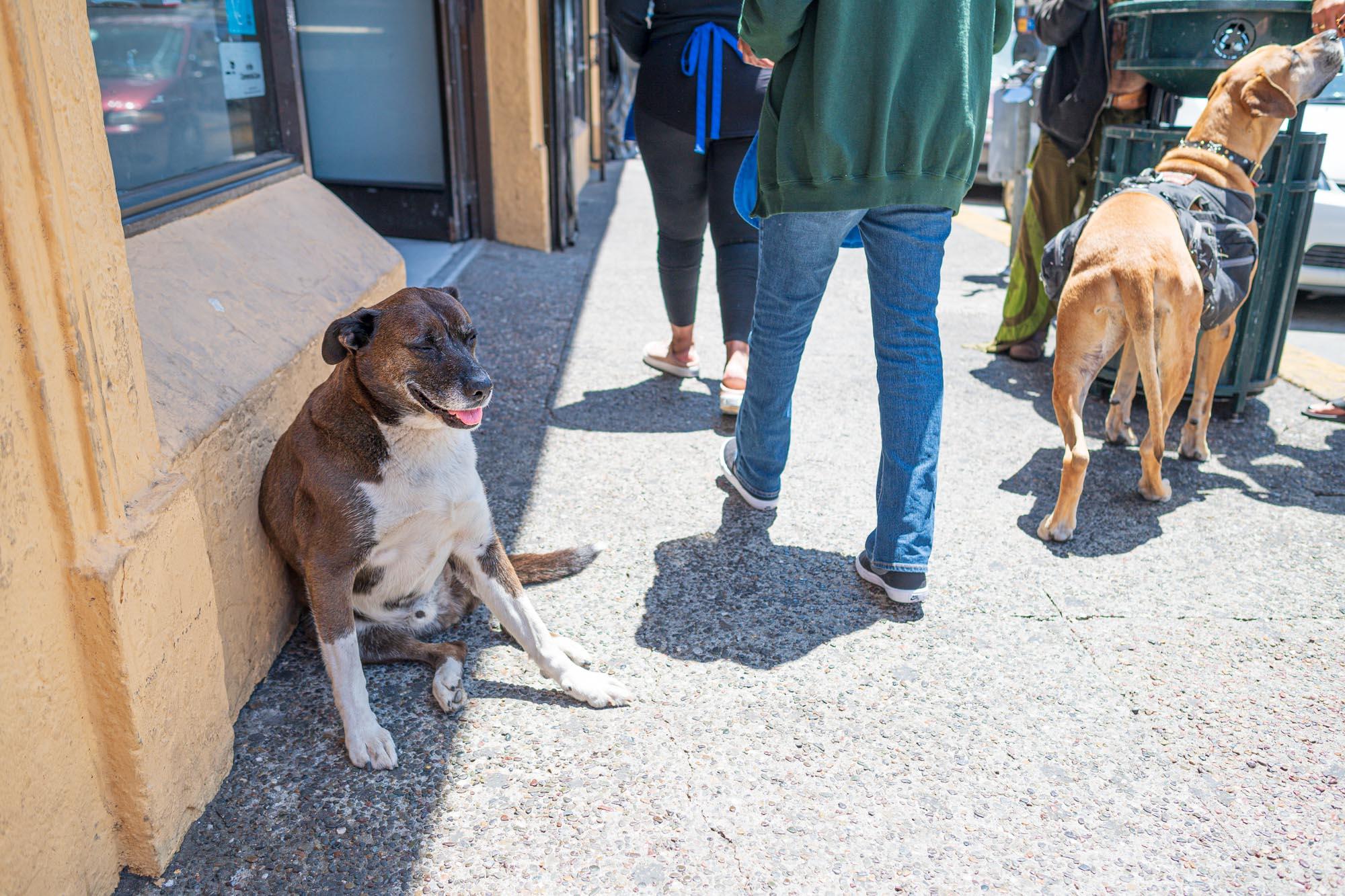a dog sits on the sidewalk in Berkeley, California