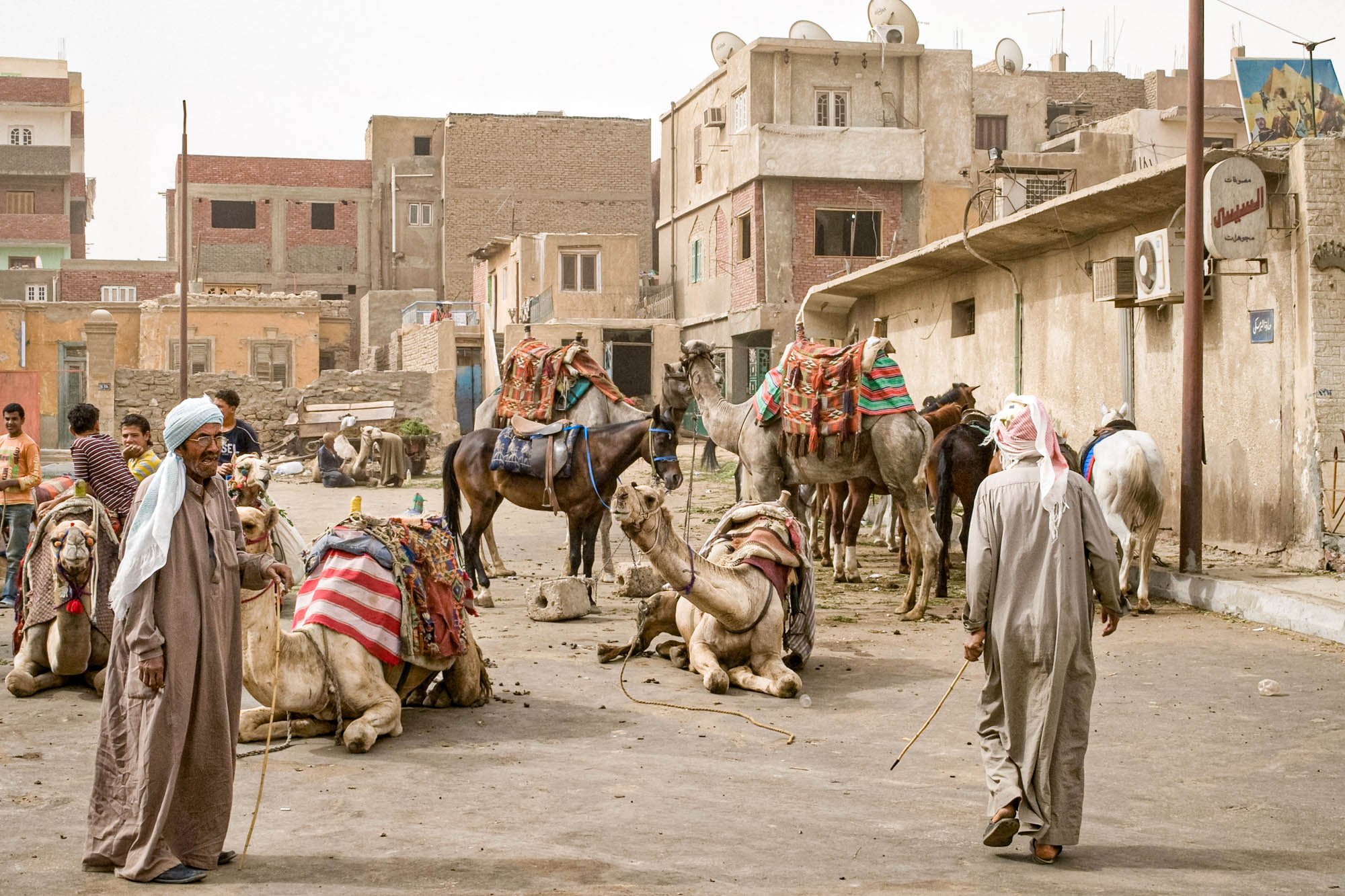 tour guides attempt to entice visitors towards a camel ride in Giza, Egypt
