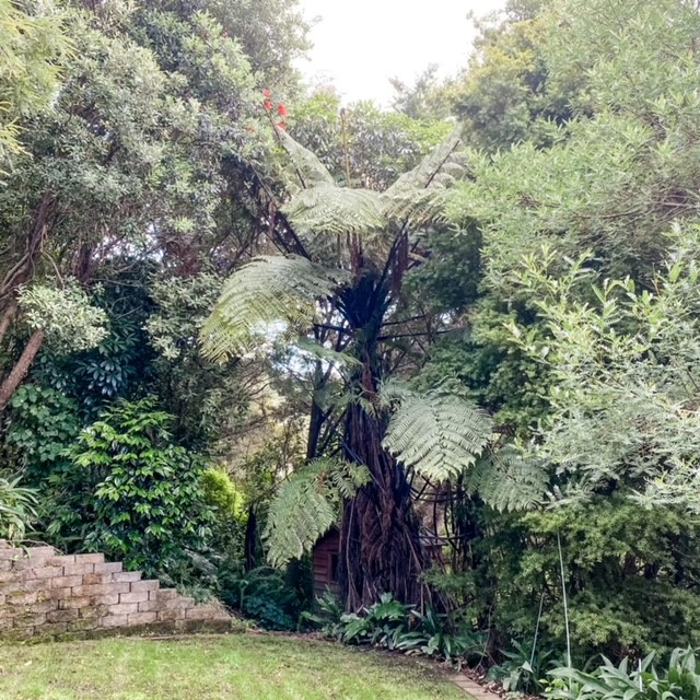 Native trees on the approach to Hayley's healing room, Lower Hutt