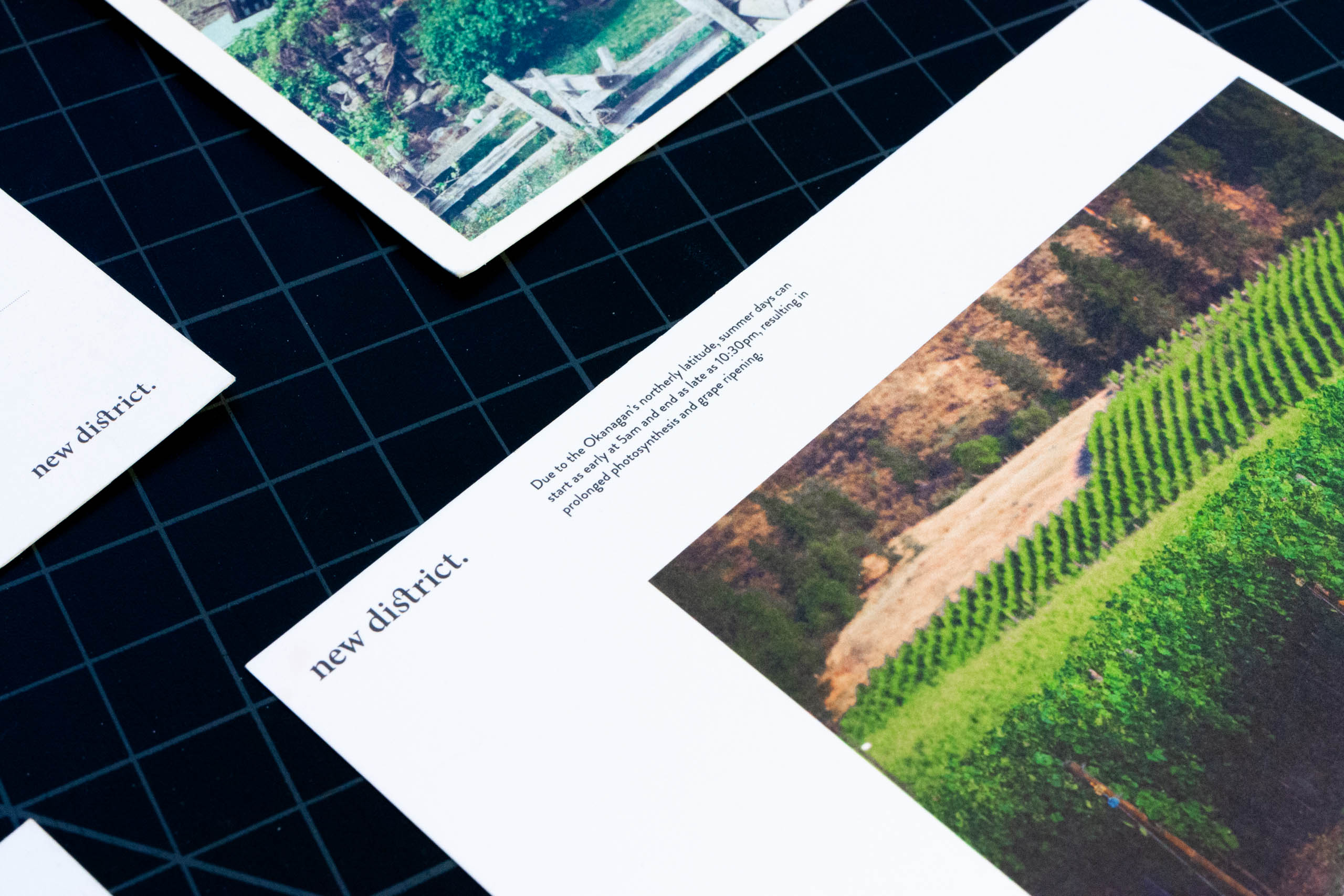 New District postcard featuring young green vines over rolling hills — by Yagnyuk.
