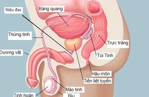 Đau bao quy đầu có thể do viêm tuyến tiền liệt