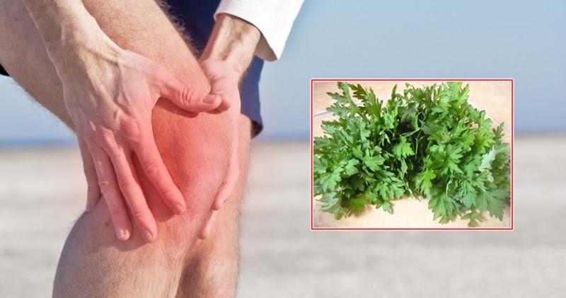 Người bệnh không lạm dụng ngải cứu khi chữa viêm khớp, tránh biến chứng nguy hiểm