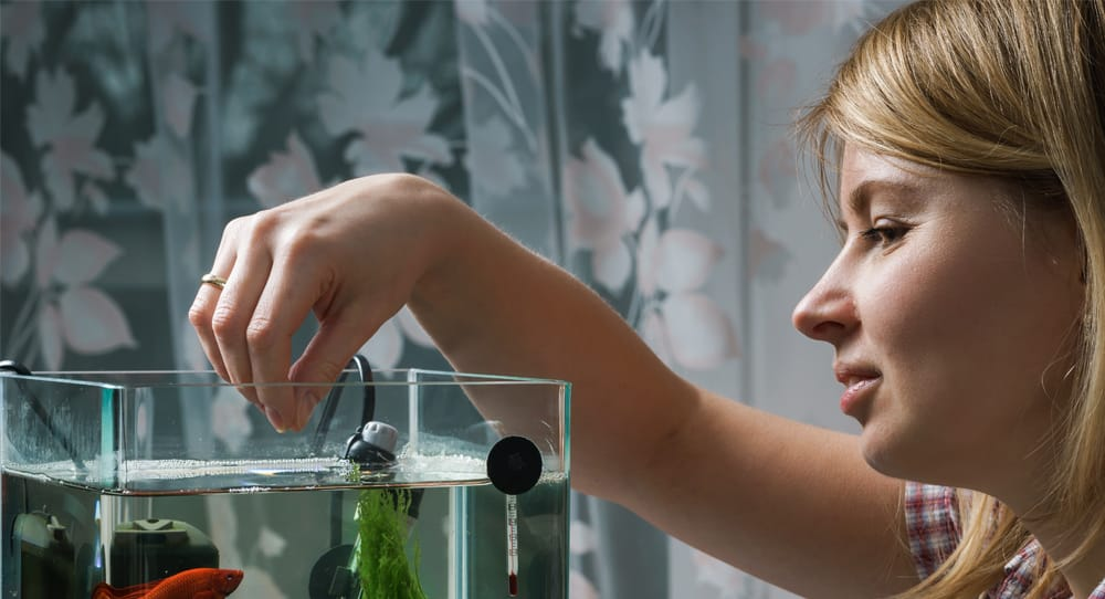 Onthard water in je aquarium