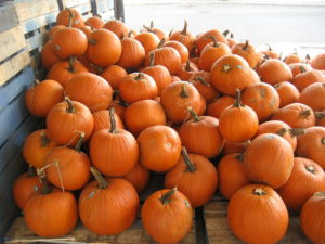 lots of pumpkins so make sure to compost at halloween