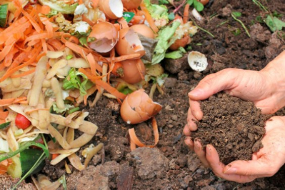 A collection of whole food scraps next to a pile of degraded summer composting material.