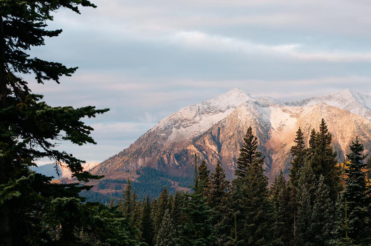 Photo of mountains and pine trees