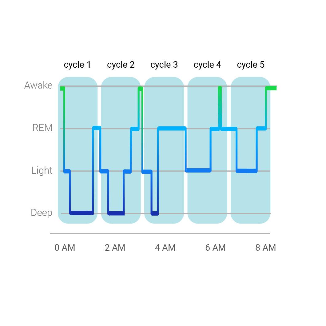 Sleep cycle example