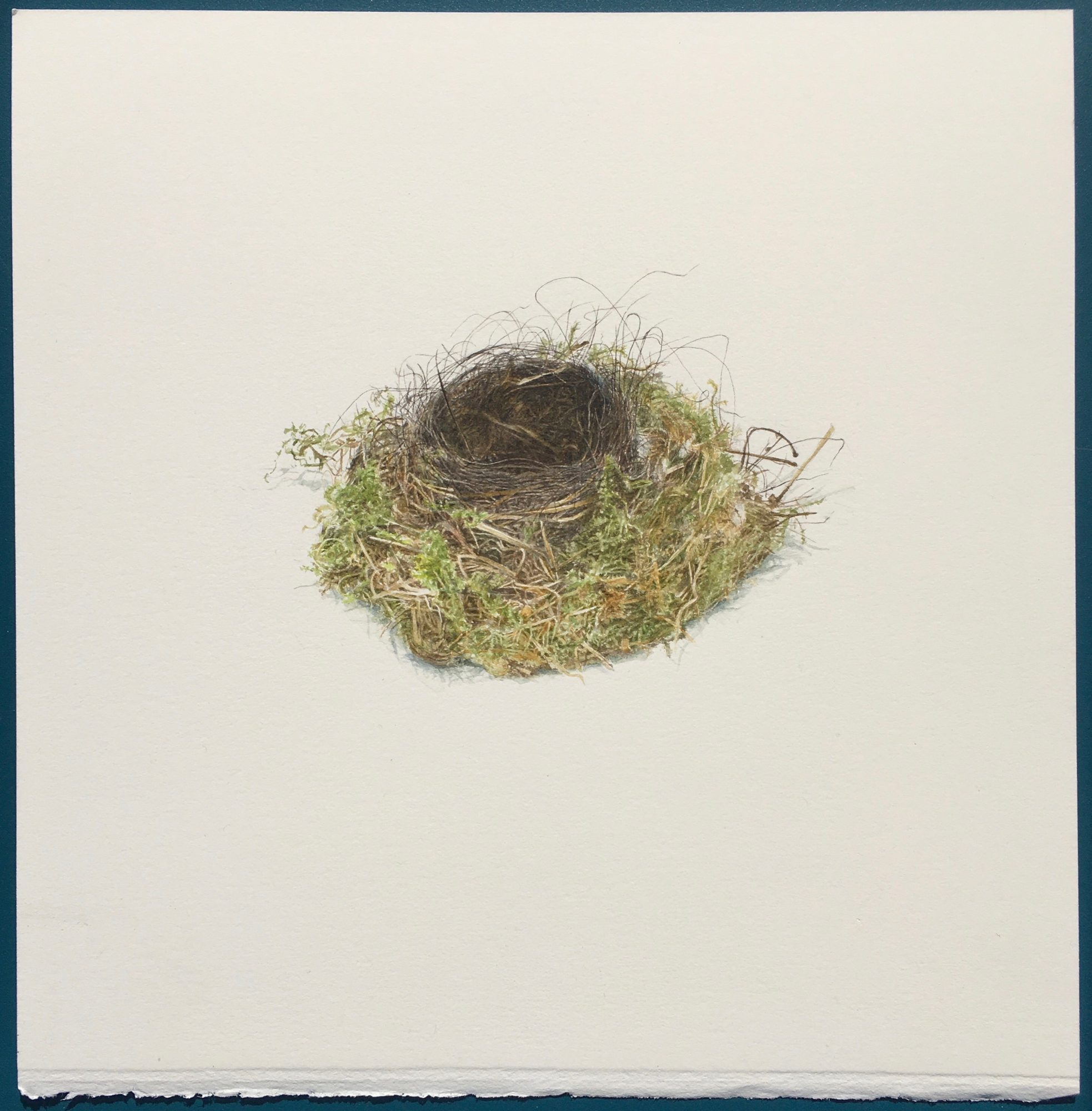 Nest that Tracy and Mark found