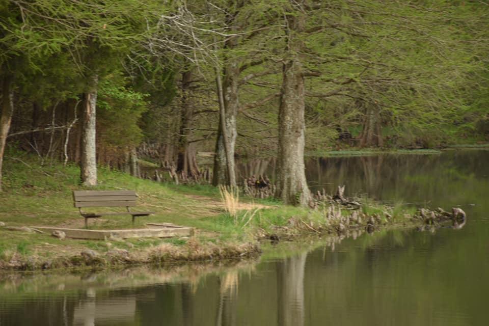 Trees next to lake