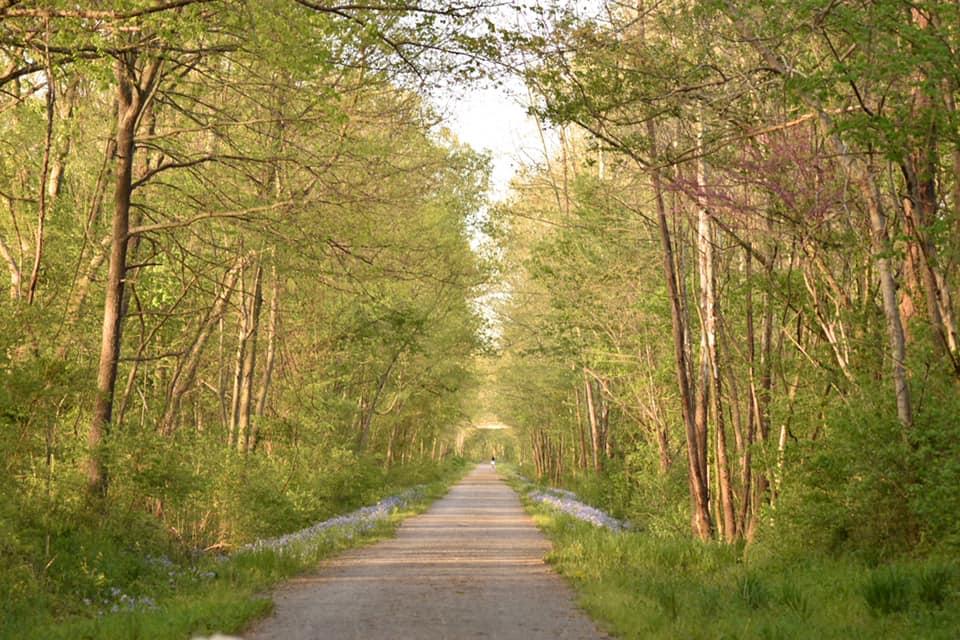 Walkway through woods