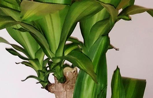 best big indoor plants