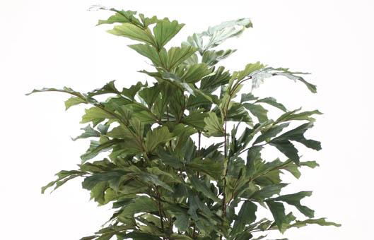 big floor plants