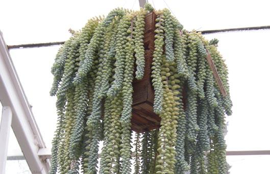 indoor hanging plants low light