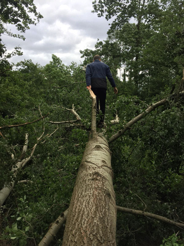 Scott Ruigrok is walking on a huge fallen tree