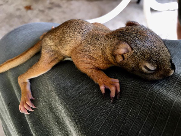 Baby rodent